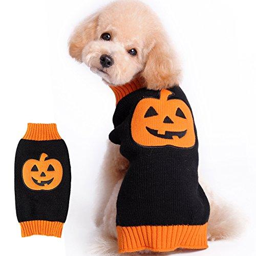 dog in orange and black pumpkin sweater