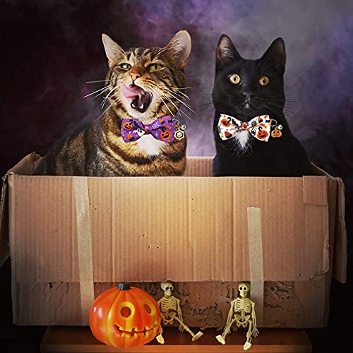 Cats in cardboard box with spooky bowties