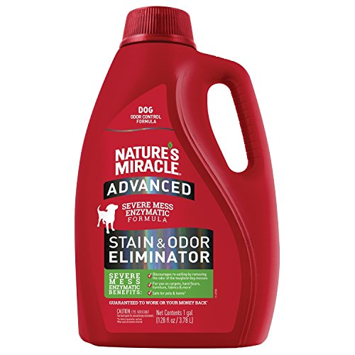 Jug of Nature's Miracle Stain & Odor Eliminator