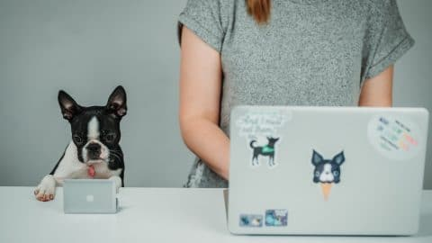 Person and dog work side by side at computers