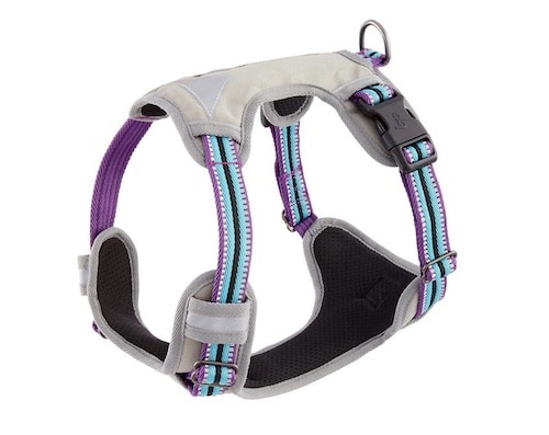grey and purple dog harness