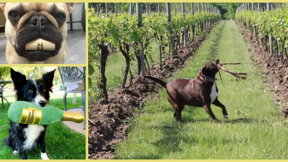 Wine dogs crushing it