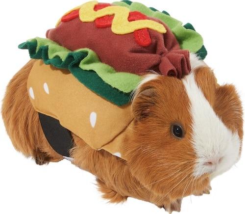 guinea pig in hot dog Halloween costume