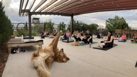 Harvey the yoga dog shows off his trick