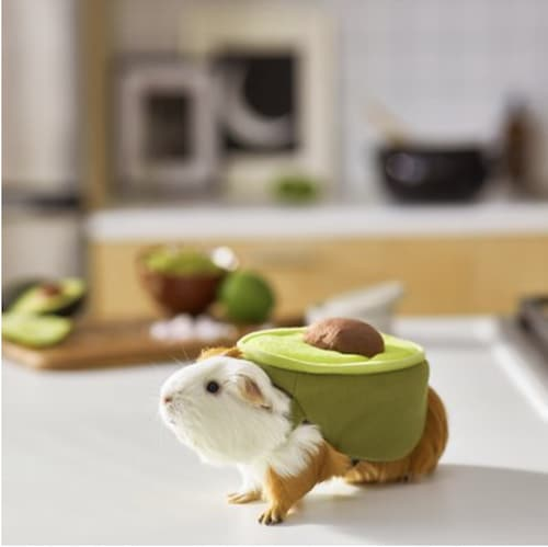 guinea pig avocado costume