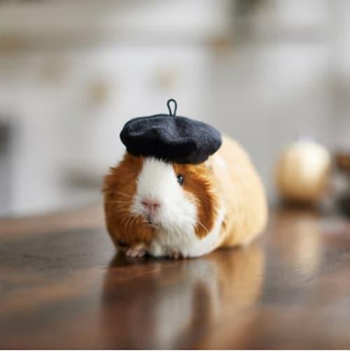 guinea pig beret costume
