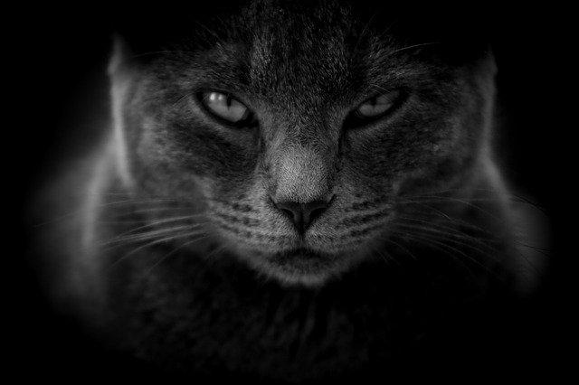 cat slow blink