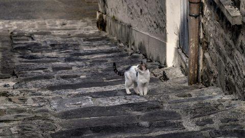 cat following me