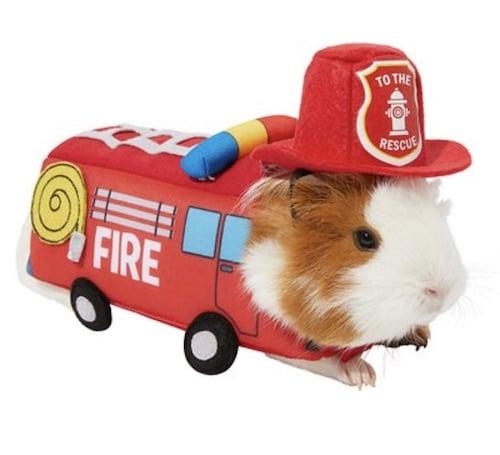guinea pig fire truck costume