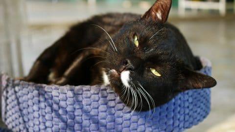 lounging black cat squinting