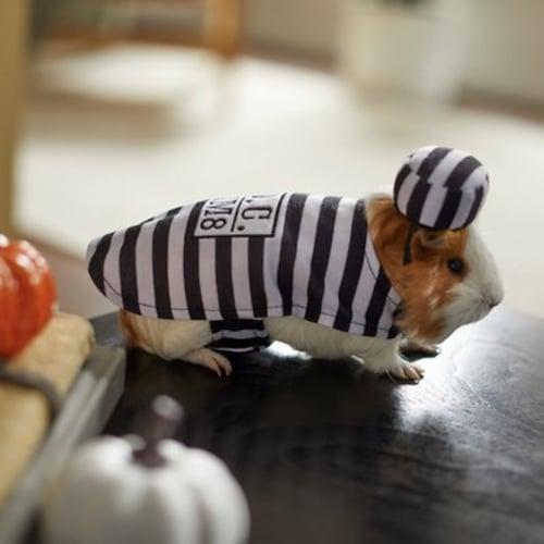 guinea pig prisoner costume