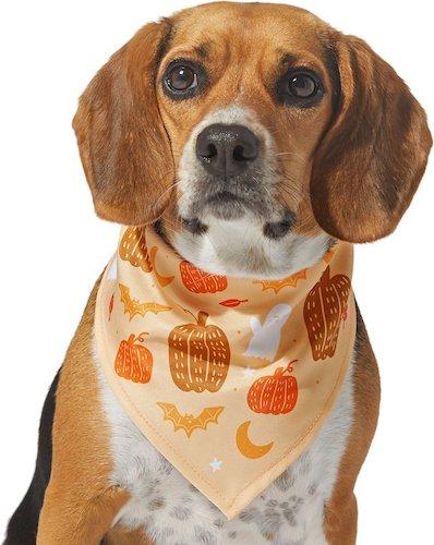 dog wearing a fall bandana with pumpkins