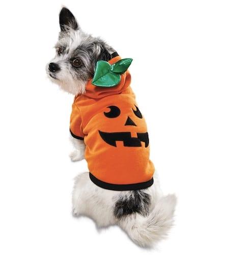dog in pumpkin hoodie