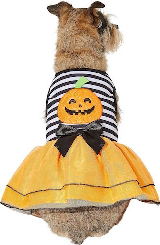 dog in jack-o-lantern dress