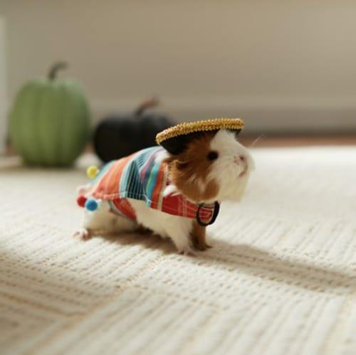guinea pig serape costume