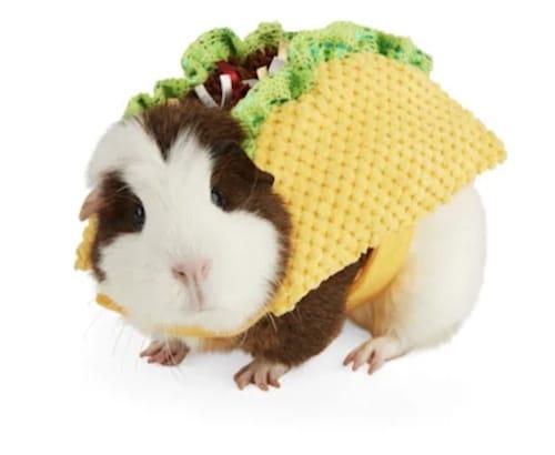 guinea pig taco costume
