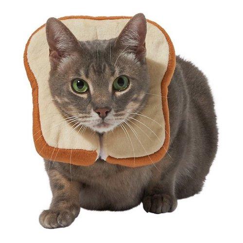 Cat in bread costume (collar)