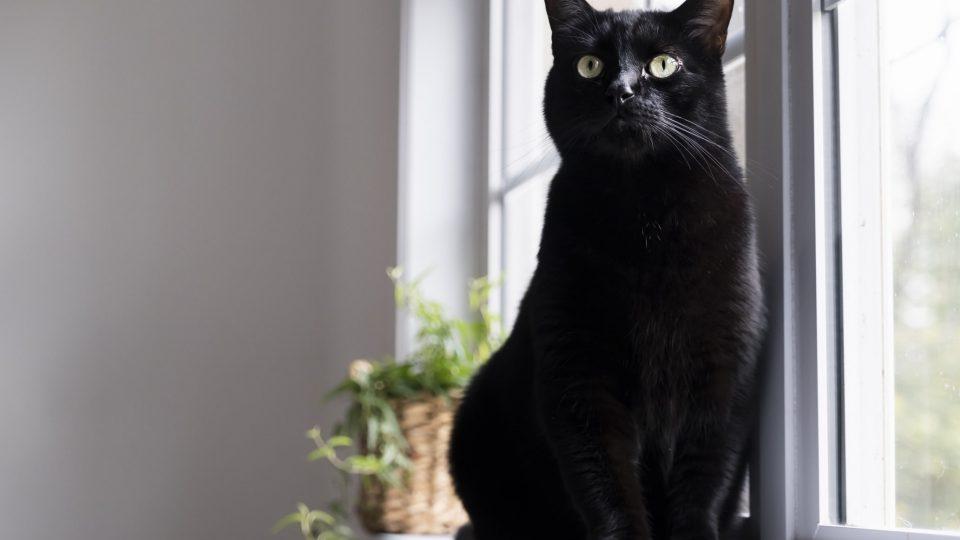 pretty black kitty sitting in a window