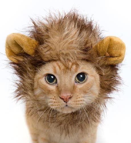 lion mane cat neckwear for halloween