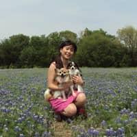 Satomi's dog day care