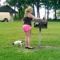 Lisa's Safe Dog Boarding dog boarding & pet sitting
