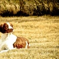 Wynterpoint dog boarding & pet sitting