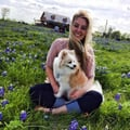 Fluffies of Uptown! dog boarding & pet sitting