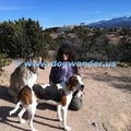 Dog Wonder, LLC dog boarding & pet sitting