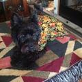 Mutt's Up? dog boarding & pet sitting