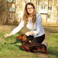 Dog care with love, like owners do! dog boarding & pet sitting