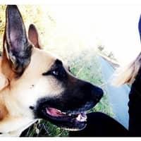L'hébergement pour chien de Peyroux Maeva