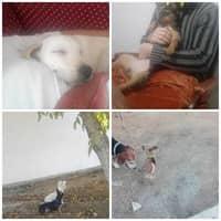 Alojamiento de perros de Javier