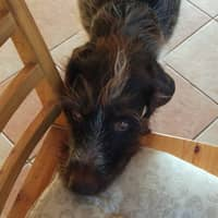 L'hébergement pour chien de Olga