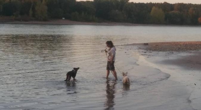 Spiel und Spaß mit Hunden, Hundesitter in KÖLN
