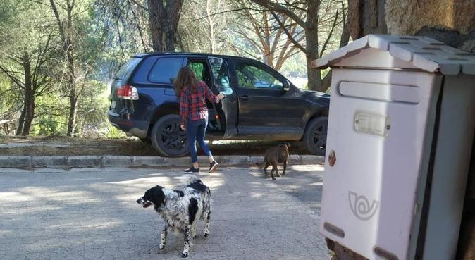 Cuidado todo tipo de personitas peludas, canguro en San Martín de Valdeiglesias, España