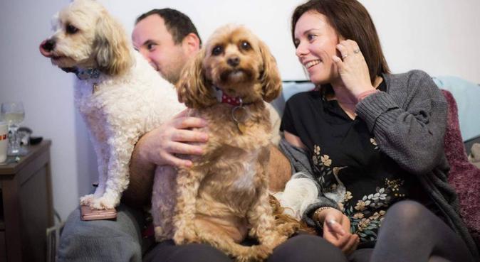 Friendly dog loving house, dog sitter in Bristol
