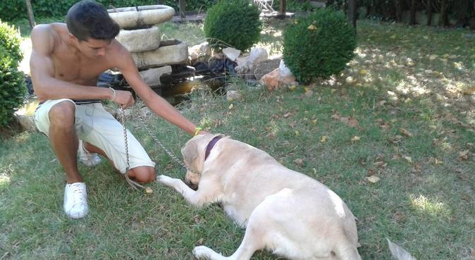 Devoción por los perros diría yo, canguro en Rivas-vaciamadrid