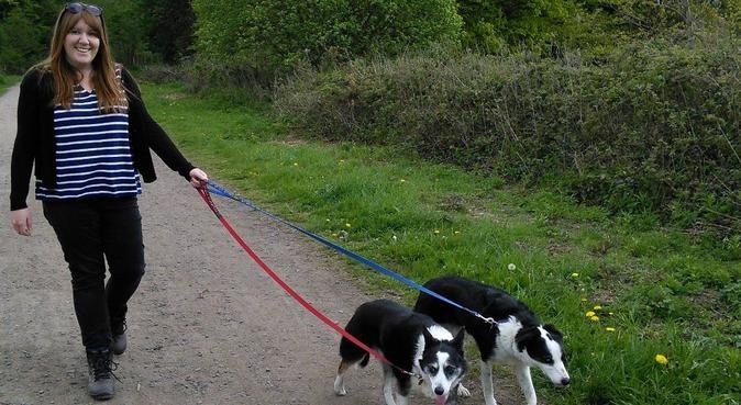 Have fun and enjoy Yorkshire, dog sitter in Barnsley