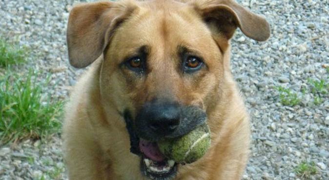 Le meilleur ami de votre chien après vous :), dog sitter à Caen