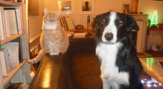 Chiens actifs qui aiment le bois, jouer, et courir, dog sitter à Saint-Maurice
