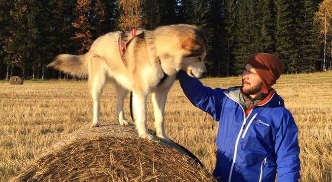Kos, trim og utforskning av Bymarka!, hundepassere i Trondheim