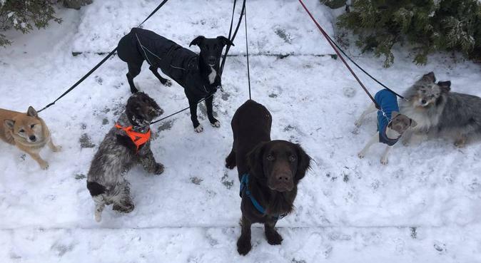 Hundrastning och hundtrim med Sara och Hyss., hundvakt nära Stockholm