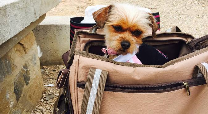 DOS COMPAÑEROS I can help you. Dog walking, dog sitter in Nottingham