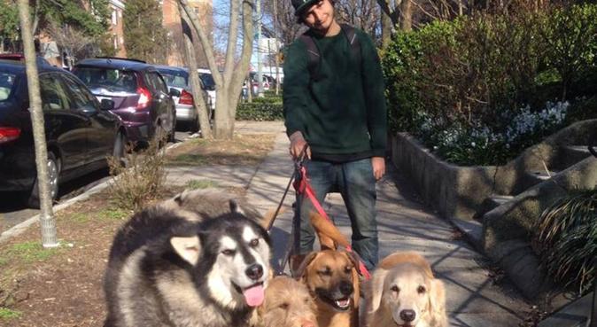 Pour nos meilleurs amis, dog sitter à Lormont