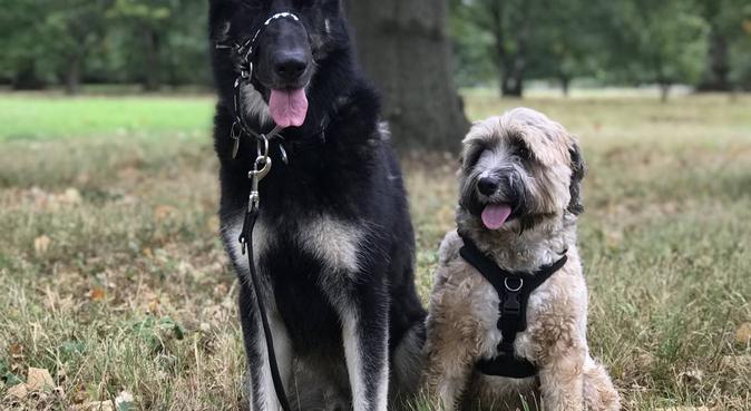 Mutt Magic Pet Services, dog sitter in Farnham Common