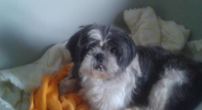 Bienvenu au Fanny'Club, dog sitter à Mauves-sur-Loire