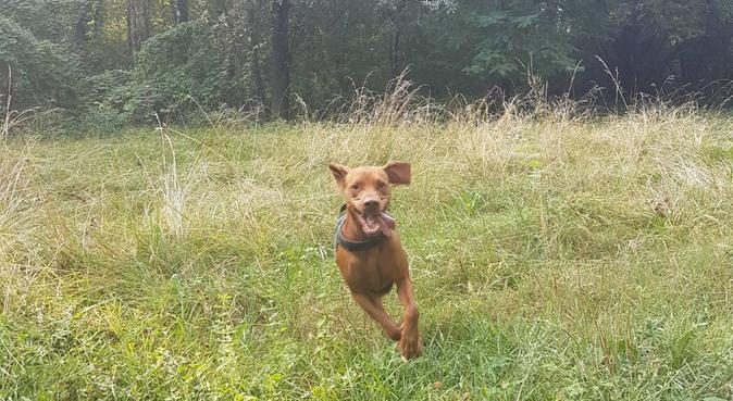 Passeggiate belle e nuove per i vostri cani!, dog sitter a Parma