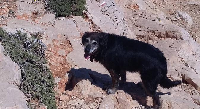 L'amour des toutous, dog sitter à Marseille