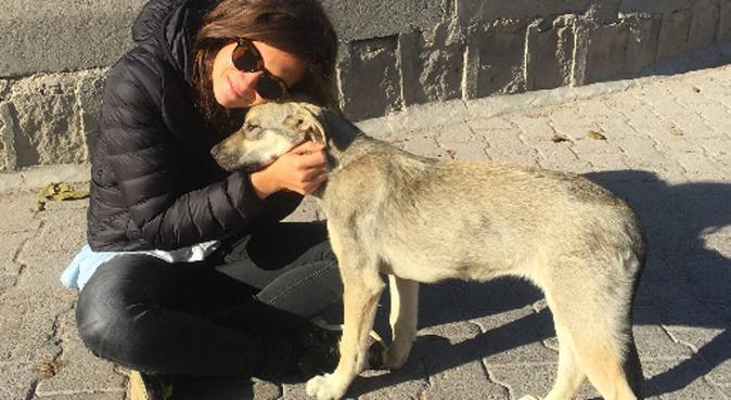 Gardes et promenades de chiens, dog sitter à Annecy-le-vieux