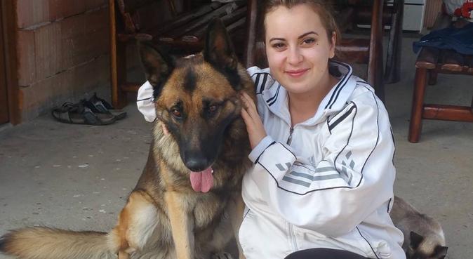 Dog lover in Worcester, dog sitter in Worcester, UK